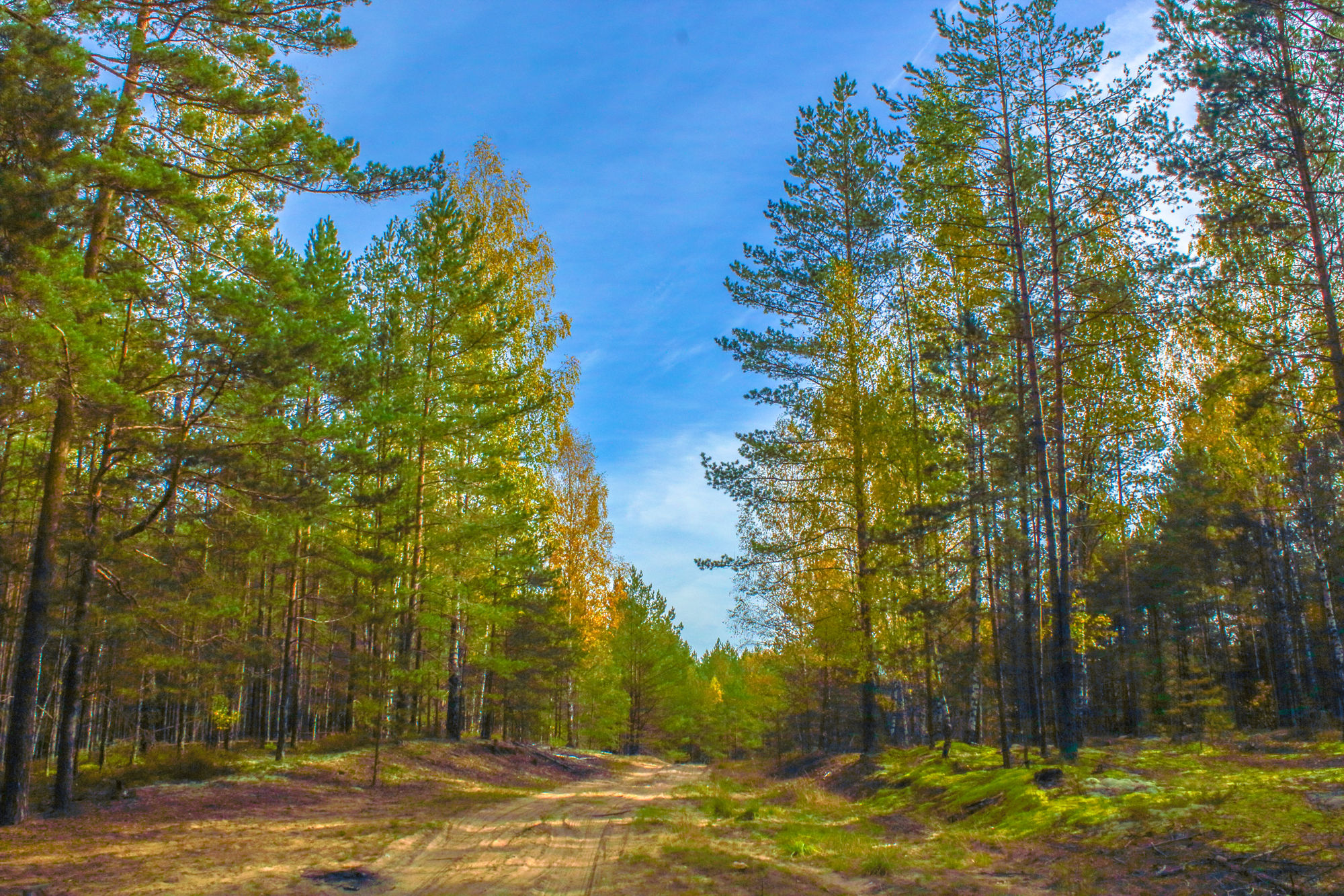 About Belarus Forests