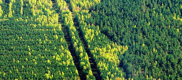 Call for nationwide approach to forestry sector