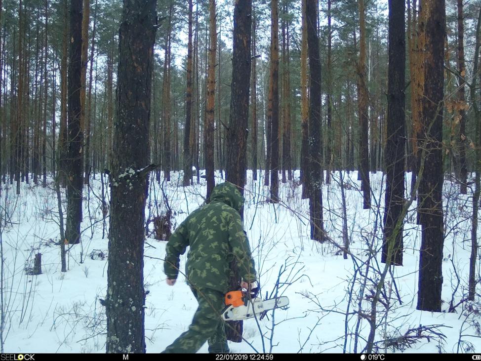 Бобруйский лесхоз.png