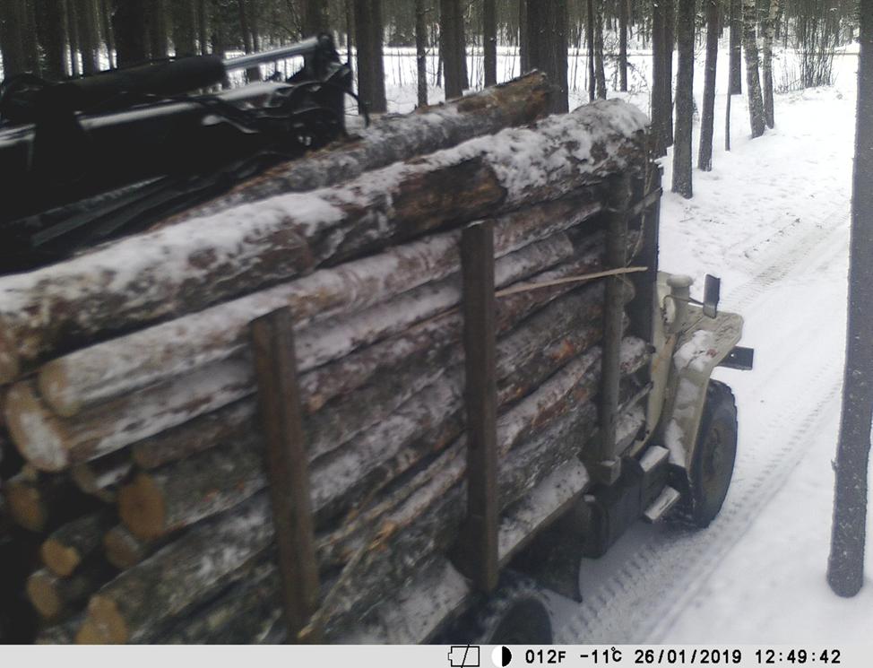 Березинский лесхоз.png